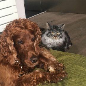 Trento e Provincia-vita col cane